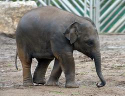 Elephant1_2